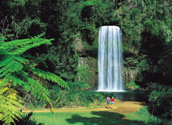 Millaa Millaa Falls - Image courtesy of Tourism Queensland